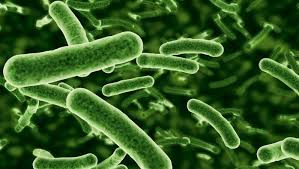 Scoperti oltre 100 nuovi microrganismi nel nostro intestino